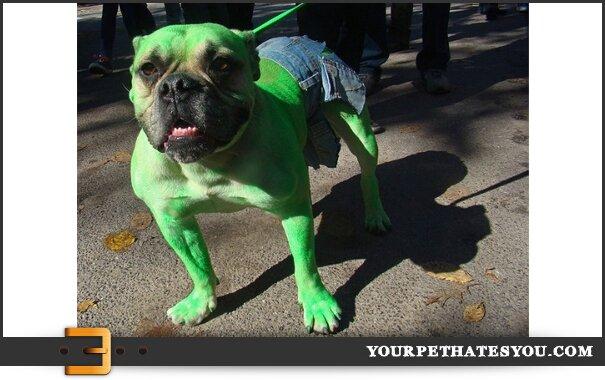 Good Hulk Costume Good Costume Choice
