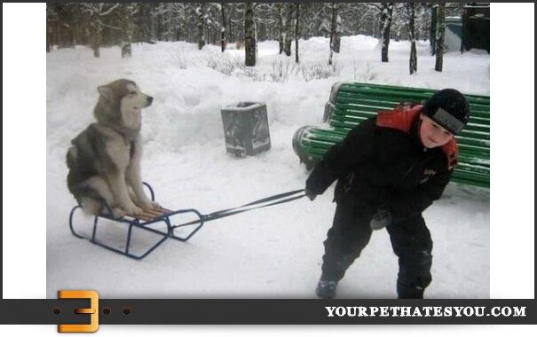 boy-pulling-dog-sled