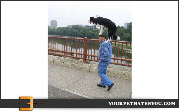 dog-walking-man