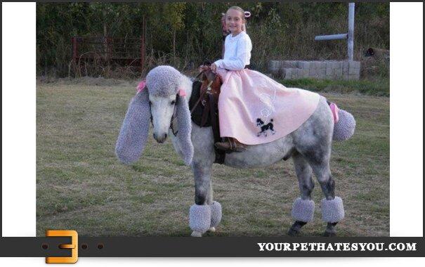 horse-dressed-like-a-poodle