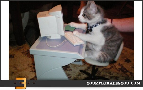 kitten-on-a-computer