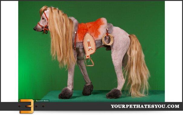 poodle-horse1