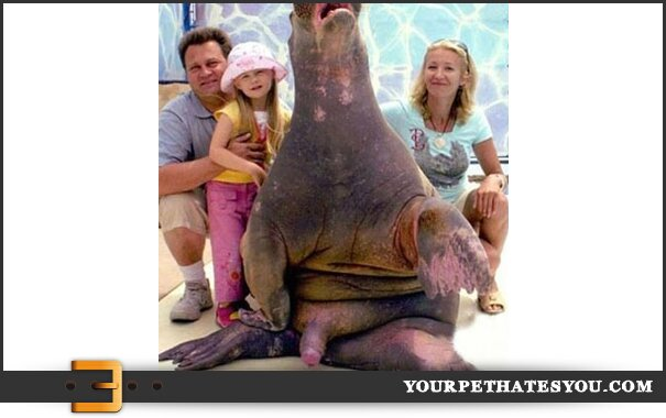walrus-penis-family-photo