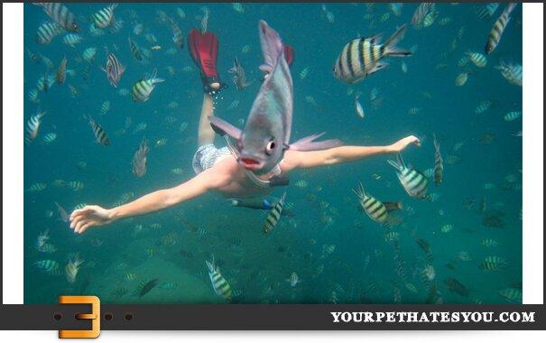 fish-photo-bomb