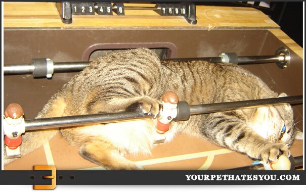fooseball-cat