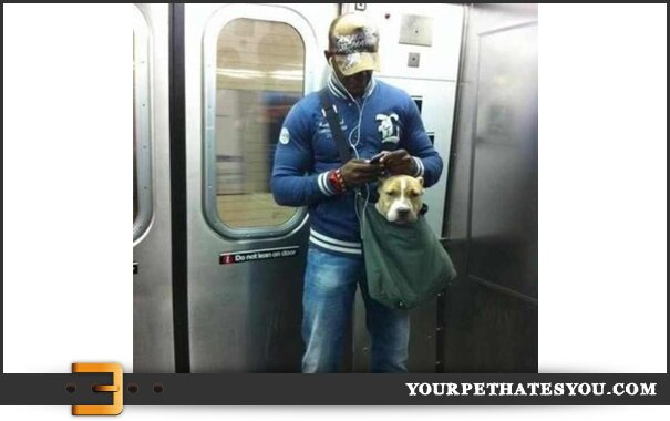 subway-dog