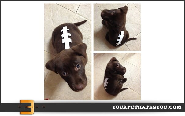 super-bowl-puppy