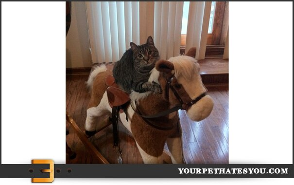 cat-on-horse