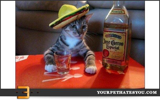 drunk-cat-1