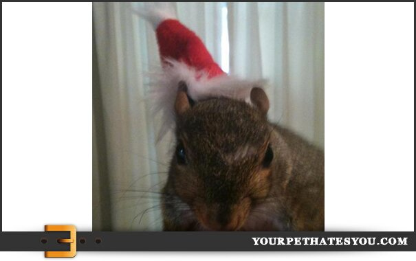 squirrel-santa