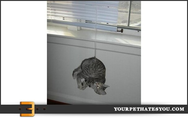 cat-curtain