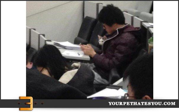 cat-in-class