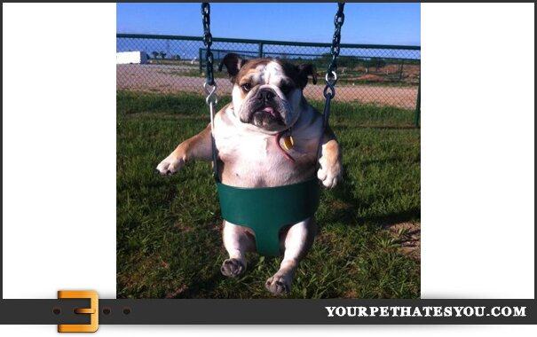 dog-swing