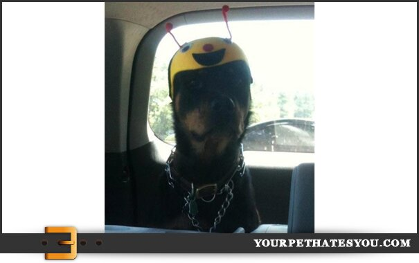 dog-with-helmet