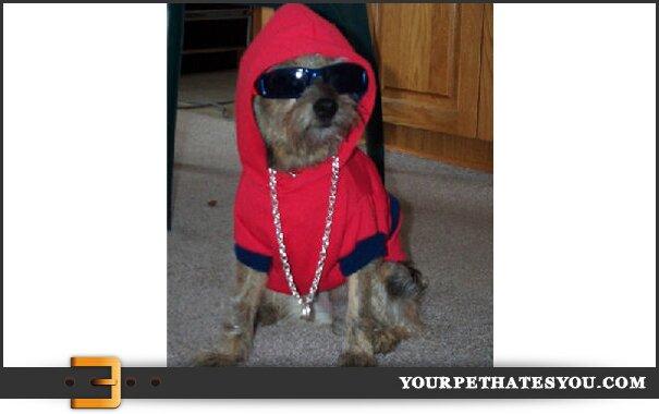 thug-dog
