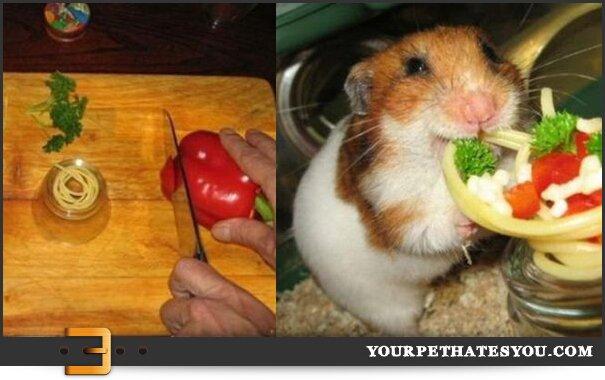 hamster-spaghetti