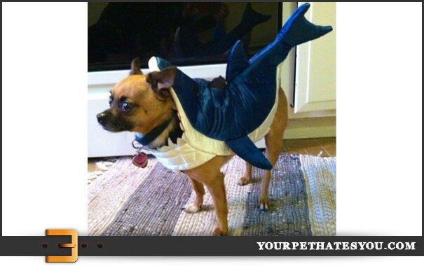 shark-dog