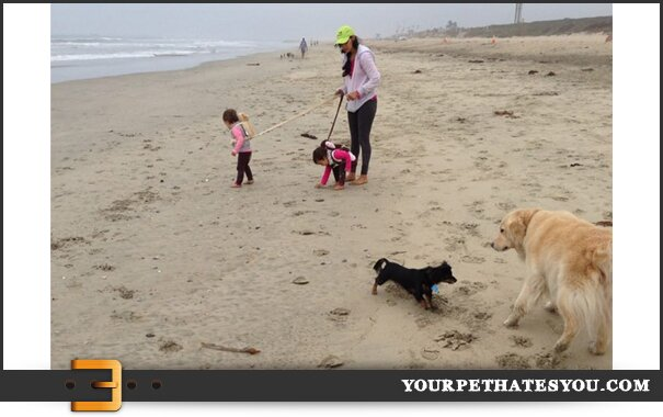 kids-on-leash-dogs-free