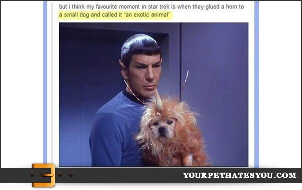 star-trek-dog