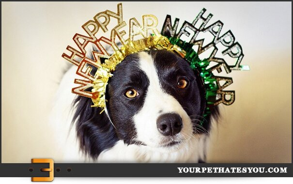 happy-new-year-dog