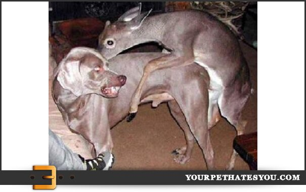 deer-humping-dog