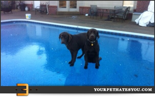 dogs-on-water